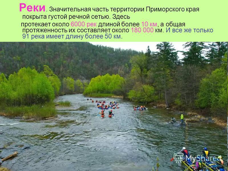 Реки. Значительная часть территории Приморского края покрыта густой речной сетью. Здесь протекает около 6000 рек длиной более 10 км, а общая протяженность их составляет около 180 000 км. И все же только 91 река имеет длину более 50 км.
