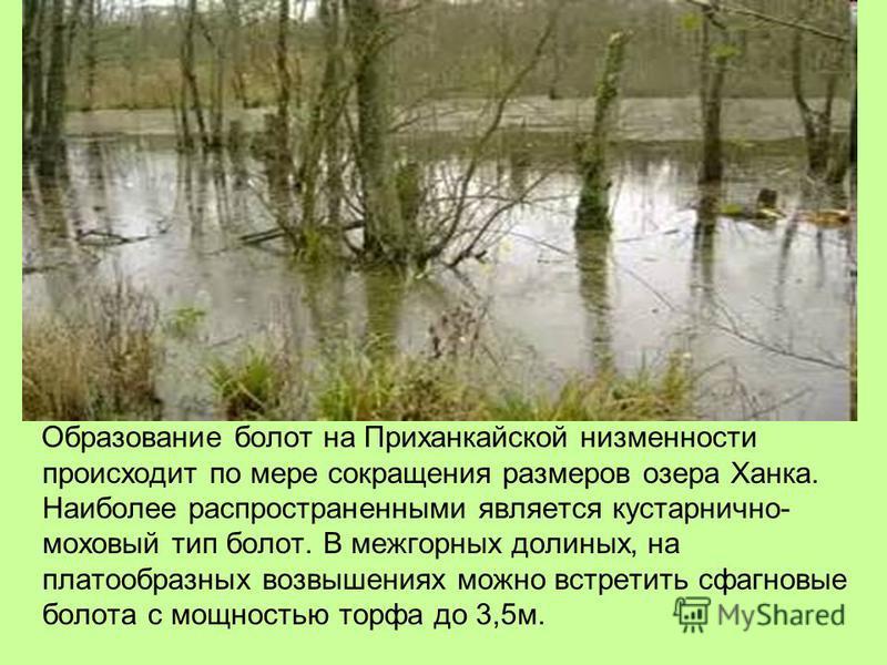 Образование болот на Приханкайской низменности происходит по мере сокращения размеров озера Ханка. Наиболее распространенными является кустарнично- маховый тип болот. В межгорных долиных, на платообразных возвышениях можно встретить сфагновые болота