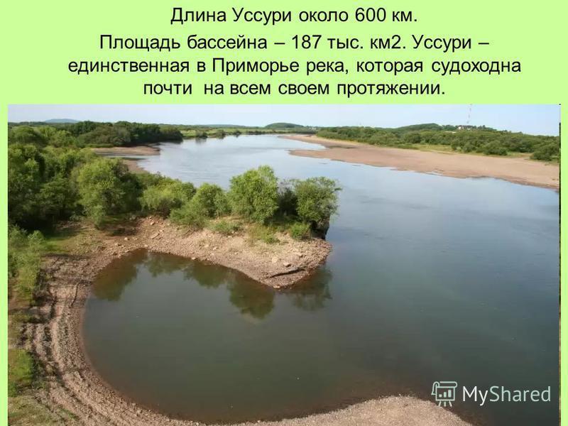 Длина Уссури около 600 км. Площадь бассейна – 187 тыс. км 2. Уссури – единственная в Приморье река, которая судоходна почти на всем своем протяжении.