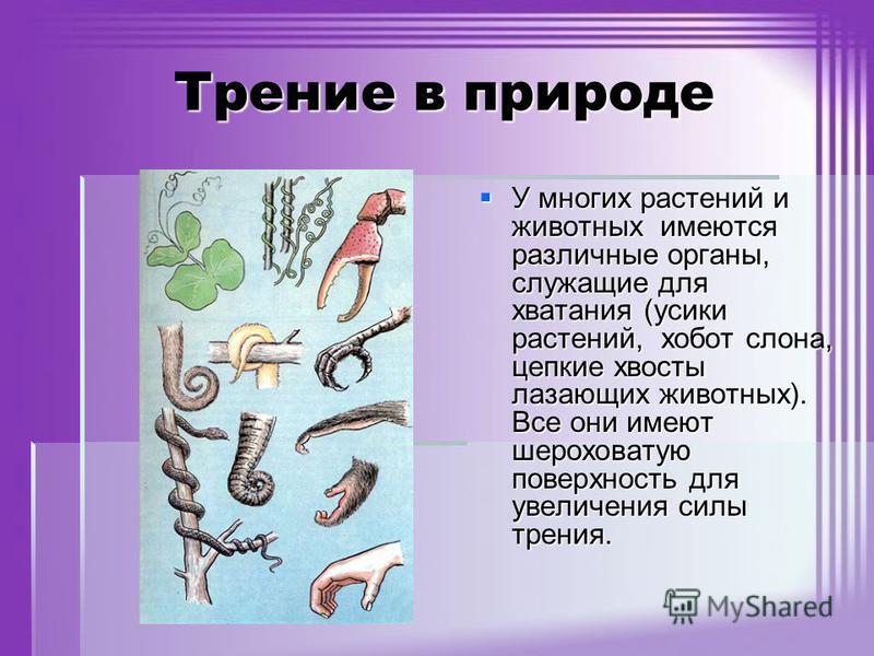 Трение в природе У многих растений и животных имеются различные органы, служащие для хватания (усики растений, хобот слона, цепкие хвосты лазающих животных). Все они имеют шероховатую поверхность для увеличения силы трения. У многих растений и животн