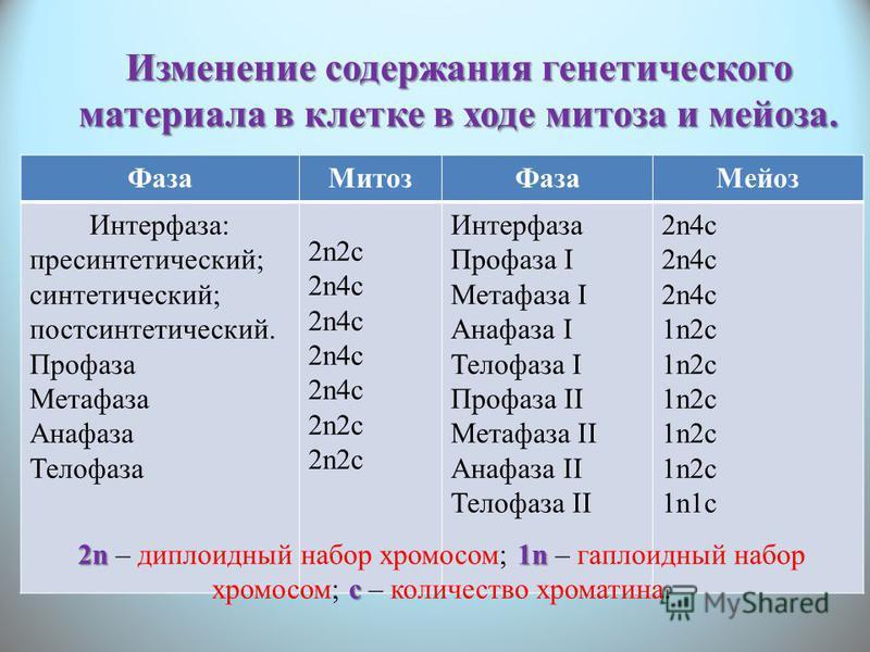 Изменение содержания генетического материала в клетке в ходе митоза и мейоза. Фаза МитозФаза Мейоз Интерфаза: пресинтетический; синтетический; постсинтетический. Профаза Метафаза Анафаза Телофаза 2n2c 2n4c 2n2c Интерфаза Профаза I Метафаза I Анафаза