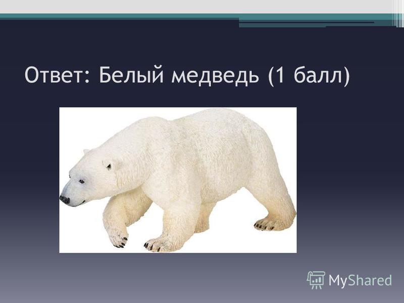 Ответ: Белый медведь (1 балл)