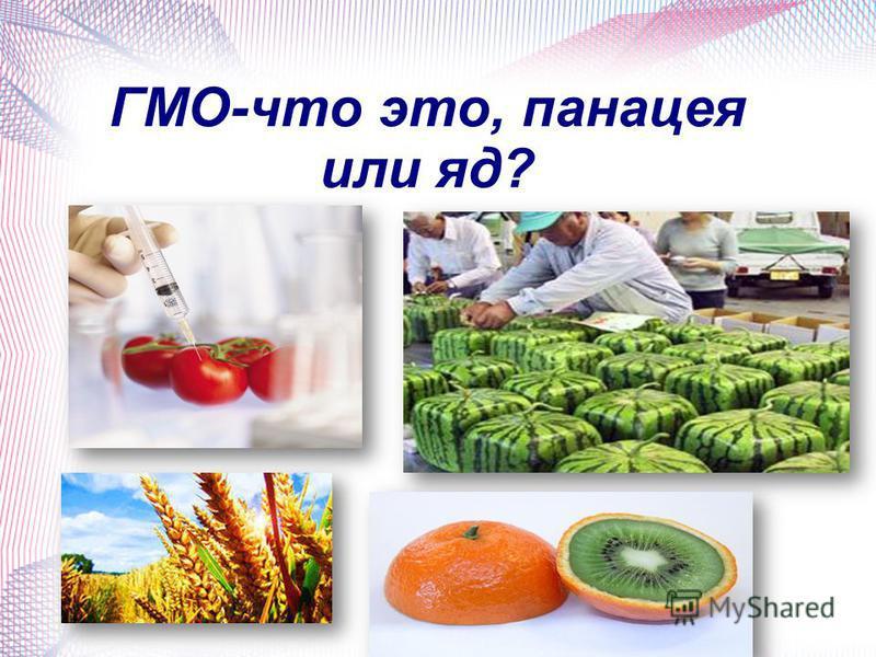 ГМО-что это, панацея или яд?