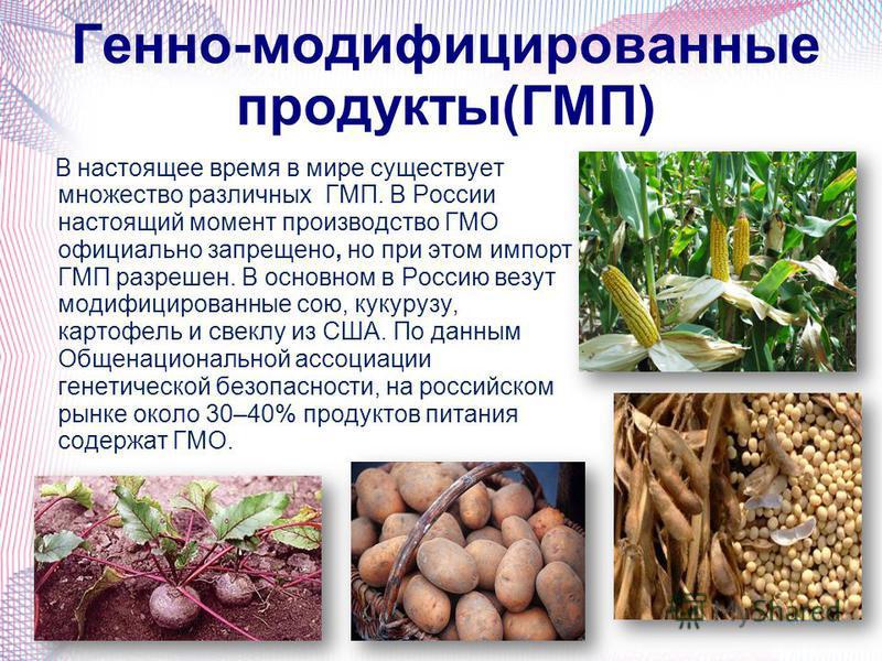 Генно-модификациированные продукты(ГМП) В настоящее время в мире существует множество различных ГМП. В России настоящий момент производство ГМО официально запрещено, но при этом импорт ГМП разрешен. В основном в Россию везут модификациированные сою,
