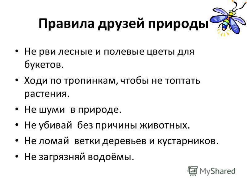 КОЛОКОЛЬЧИК ПЕРСИКОЛИСТНЫЙ