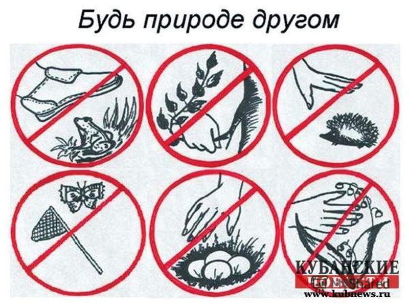 Не рви лесные и полевые цветы для букетов. Ходи по тропинкам, чтобы не топтать растения. Не шуми в природе. Не убивай без причины животных. Не ломай ветки деревьев и кустарников. Не загрязняй водоёмы. Правила друзей природы