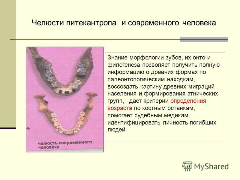 Знание морфологии зубов, их онто-и филогенеза позволяет получить полную информацию о древних формах по палеонтологическим находкам, воссоздать картину древних миграций населения и формирования этнических групп, дает критерии определения возраста по к