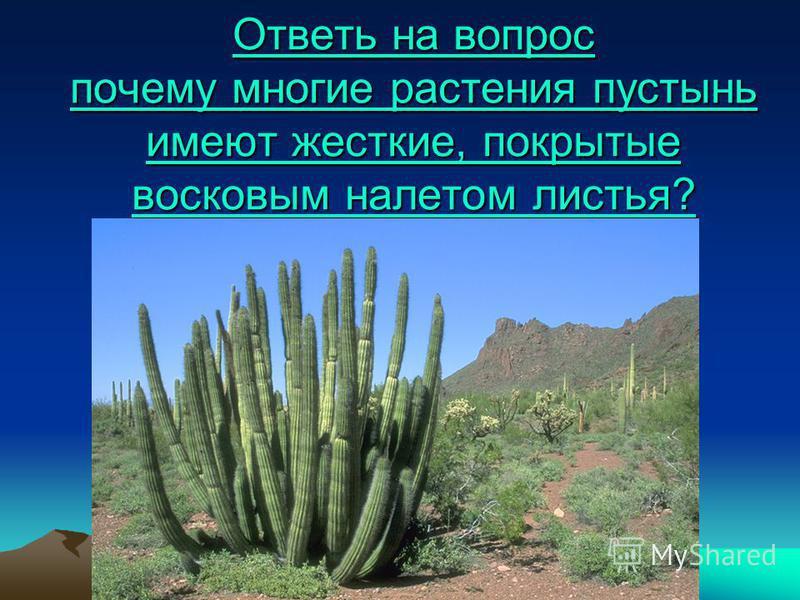 Ответь на вопрос почему многие растения пустынь имеют жесткие, покрытые восковым налетом листья? Ответь на вопрос почему многие растения пустынь имеют жесткие, покрытые восковым налетом листья?