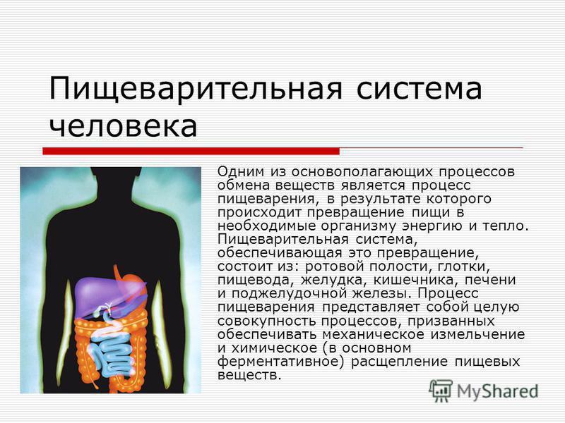 Пищеварительная система человека Одним из основополагающих процессов обмена веществ является процесс пищеварения, в результате которого происходит превращение пищи в необходимые организму энергию и тепло. Пищеварительная система, обеспечивающая это п