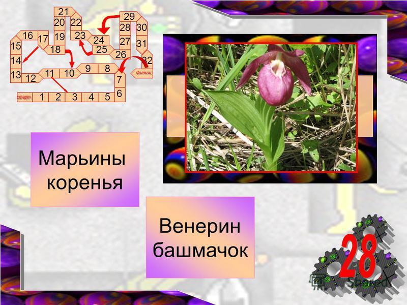 89 1011 12 16 17 18 13 12345 14 15 6 7 19 20 21 22 23 24 25 26 27 28 29 30 31 32 Венерин башмачок Марьины коренья