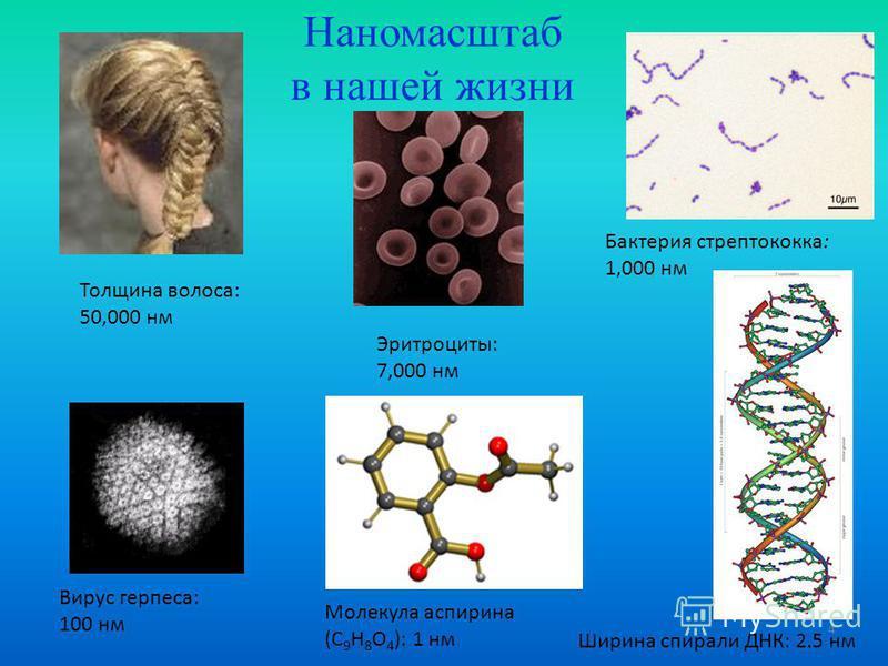 4 Наномасштаб в нашей жизни Толщина волоса: 50,000 нм Эритроциты: 7,000 нм Бактерия стрептококка: 1,000 нм Вирус герпеса: 100 нм Ширина спирали ДНК: 2.5 нм Молекула аспирина (C 9 H 8 O 4 ): 1 нм