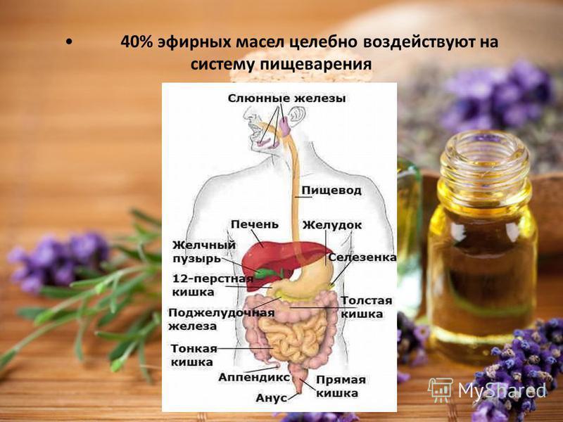 40% эфирных масел целебно воздействуют на систему пищеварения