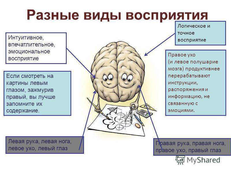 Разные виды восприятия Интуитивное, впечатлительное, эмоциональное восприятие Логическое и точное восприятие Правое ухо (и левое полушарие мозга) продуктивнее перерабатывают инструкции, распоряжения и информацию, не связанную с эмоциями. Если смотрет