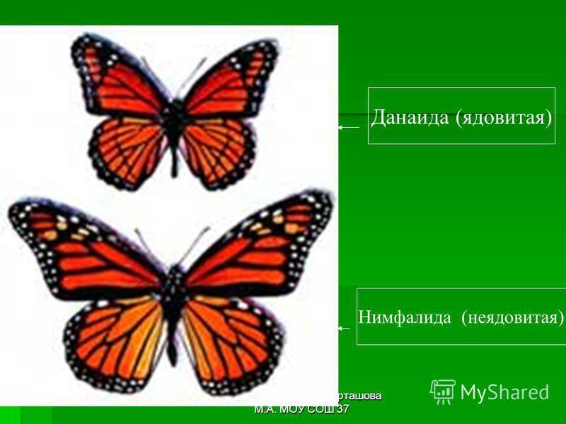 автор-составитель: Карташова М.А. МОУ СОШ 37 Данаида (ядовитая) Нимфалида (неядовитая)