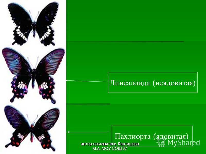 автор-составитель: Карташова М.А. МОУ СОШ 37 Пахлиорта (ядовитая) Линеалоида (неядовитая)