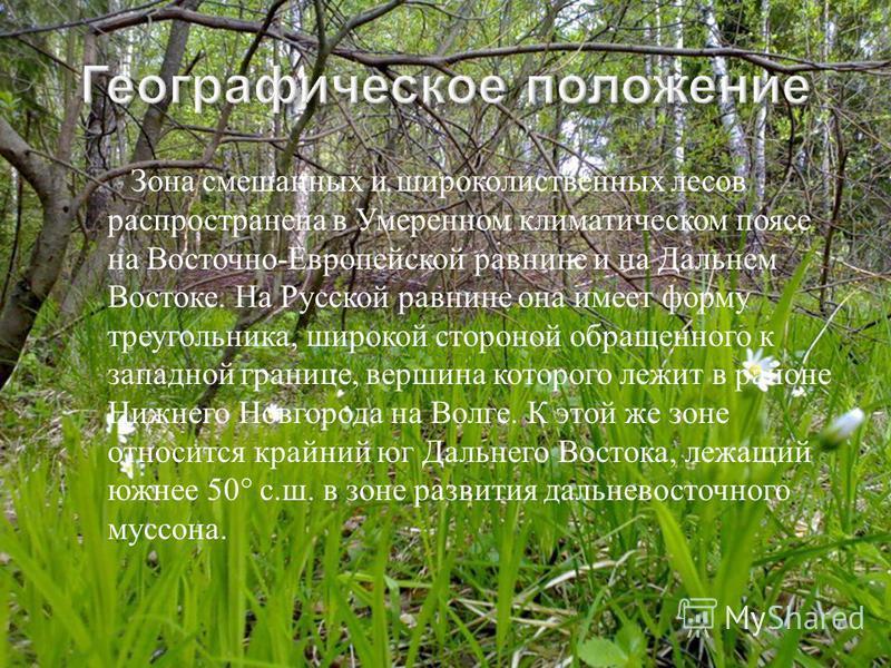 Зона смешанных и широколиственных лесов распространена в Умеренном климатическом поясе на Восточно - Европейской равнине и на Дальнем Востоке. На Русской равнине она имеет форму треугольника, широкой стороной обращенного к западной границе, вершина к