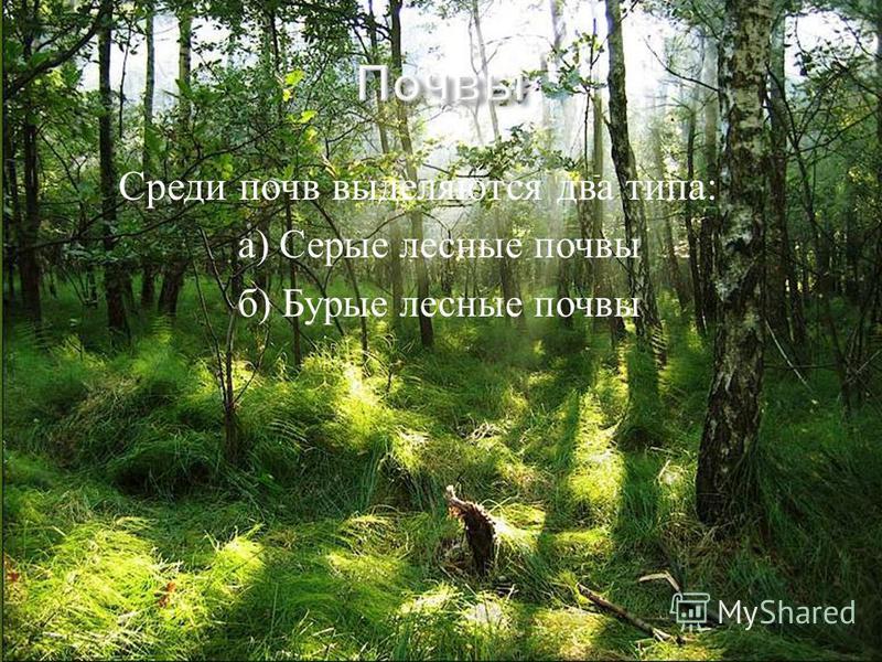 Среди почв выделяются два типа : а ) Серые лесные почвы б ) Бурые лесные почвы
