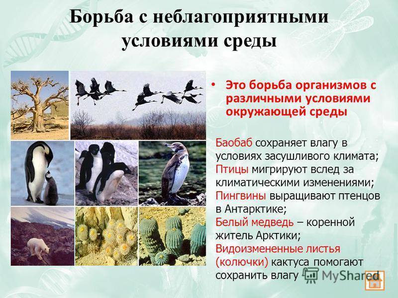 Борьба с неблагоприятными условиями среды Это борьба организмов с различными условиями окружающей среды Баобаб сохраняет влагу в условиях засушливого климата; Птицы мигрируют вслед за климатическими изменениями; Пингвины выращивают птенцов в Антаркти