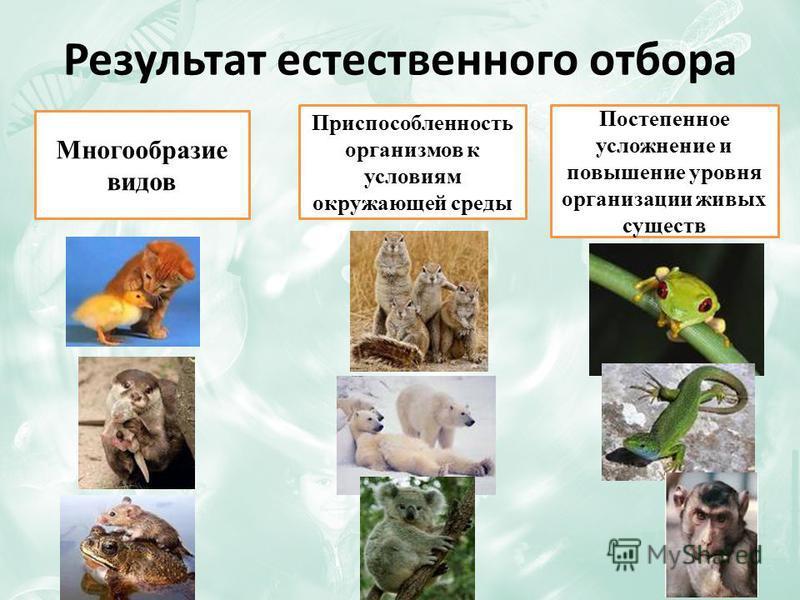 Результат естественного отбора Многообразие видов Приспособленность организмов к условиям окружающей среды Постепенное усложнение и повышение уровня организации живых существ