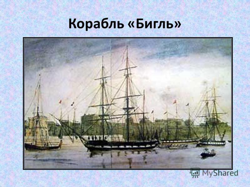 Корабль «Бигль»