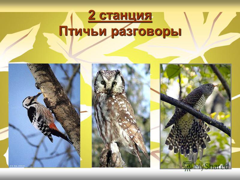 Меня называют «смотритель леса». Живу я на дереве, в дупле. Всю жизнь я на ногах, бегаю туда- сюда, вверх-вниз по дереву, мне и крылья- то нужны только для того, чтобы перелетать с одного дерева на другое. Поползень
