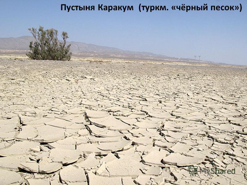 Пустыня Каракум (туркм. «чёрный песок»)