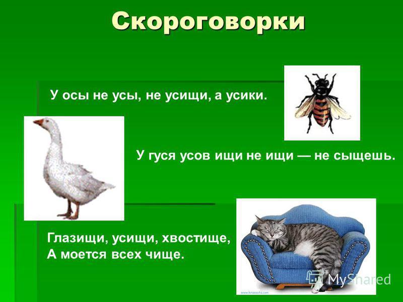 Скороговорки У осы не усы, не усищи, а усики. У гуся усов ищи не ищи не сыщешь. Глазищи, усищи, хвостище, А моется всех чище.