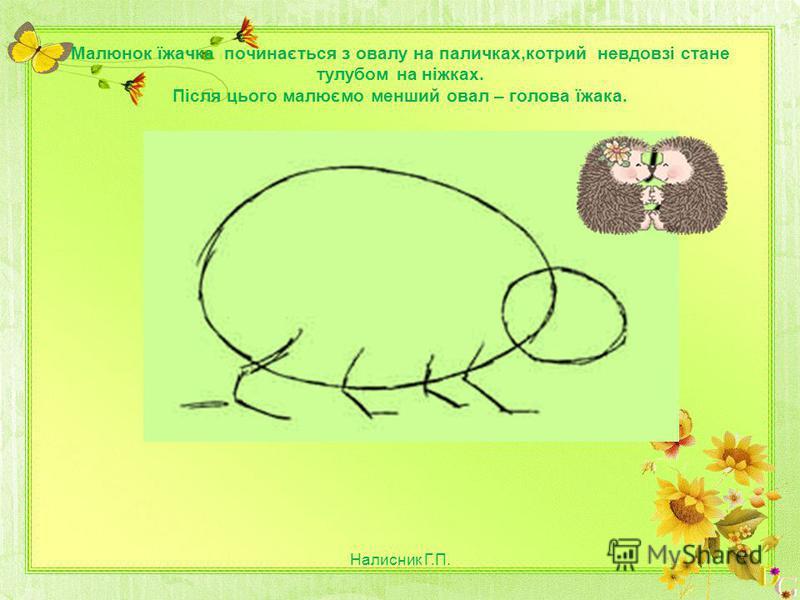 Малюнок їжачка починається з овалу на паличках,котрий невдовзі стане тулубом на ніжках. Після цього малюємо менший овал – голова їжака. Налисник Г.П.