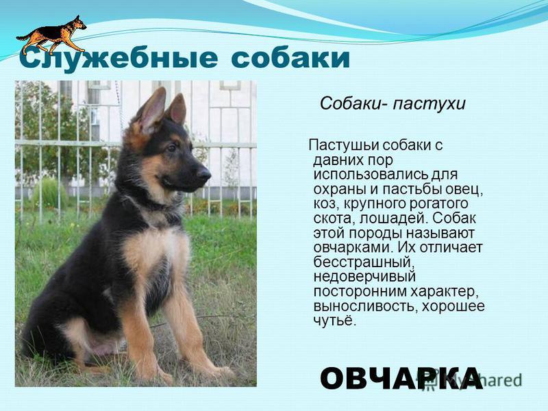 СОБАКИ - СВЯЗНЫЕ Связной и санитар Он был собакой разведчиком, собакой связным
