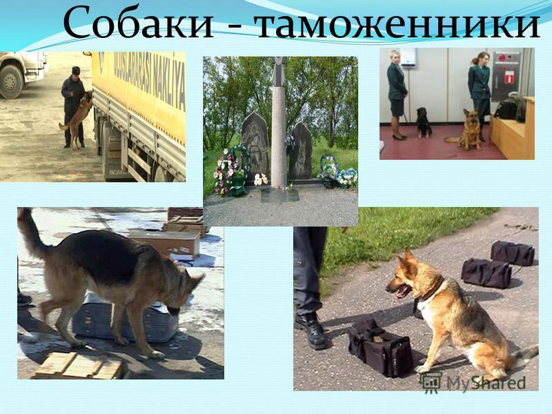 Собаки - пожарные Памятник собаке - пожарной