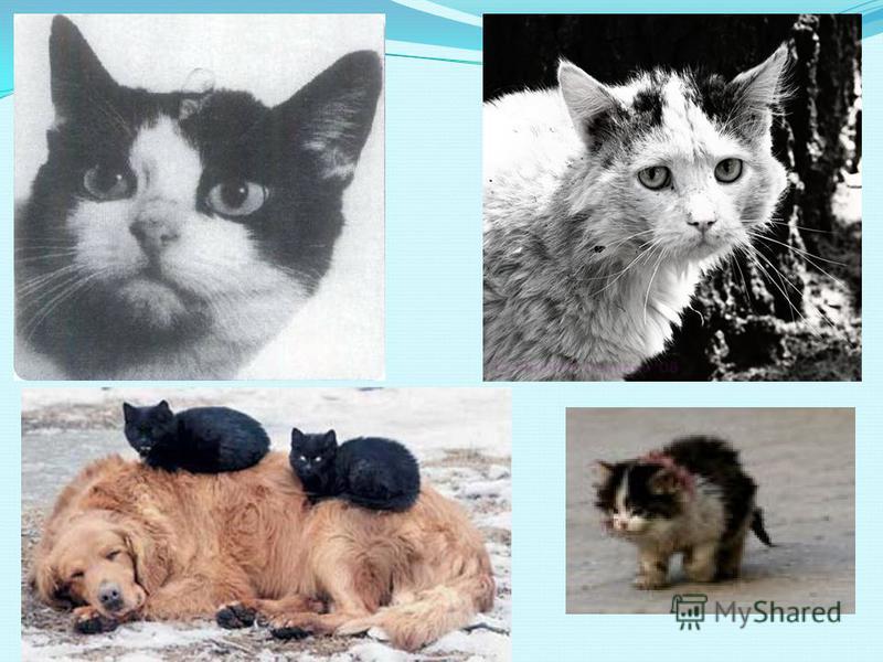 Брошенные собаки и кошки