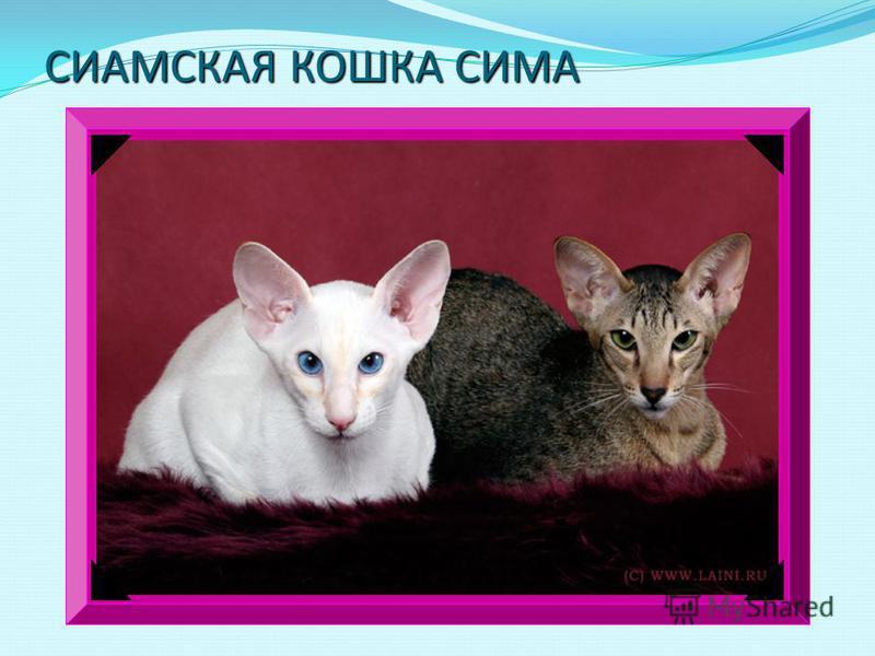 Египтяне утверждают, что у кошек полных девять жизней. Если кошка забредет к вам в дом, считают в Англии, - ждите денег, а вот в Америке услышать мяуканье кошки перед выходом из дому - дурная примета. Нужно обязательно вернуться и узнать, чего именно