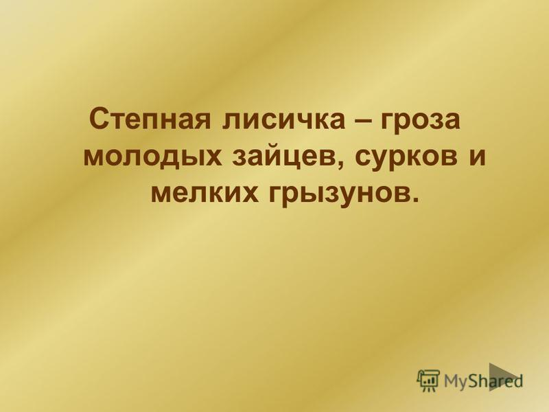 КУСТАРНИКИ