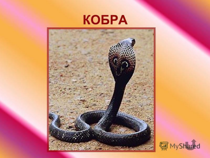 Ядовитая змея с пятнами ниже головы.