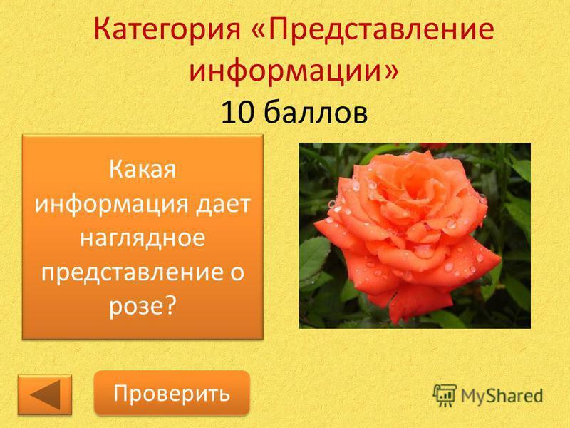 Категория «Представление информации» 10 баллов Какая информация дает наглядное представление о розе? Проверить
