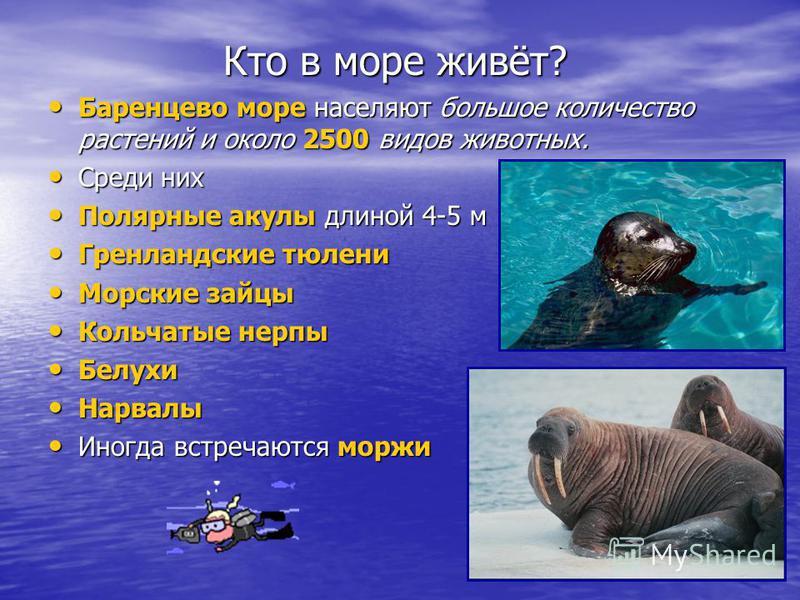 Кто в море живёт? Кто в море живёт? Баренцево море населяют большое количество растений и около 2500 видов животных. Баренцево море населяют большое количество растений и около 2500 видов животных. Среди них Среди них Полярные акулы длиной 4-5 м Поля