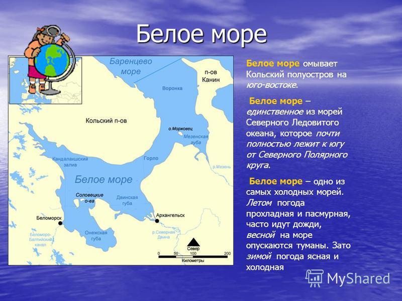 Белое море Белое море Белое море омывает Кольский полуостров на юго-востоке. Белое море – единственное из морей Северного Ледовитого океана, которое почти полностью лежит к югу от Северного Полярного круга. Белое море – одно из самых холодных морей.
