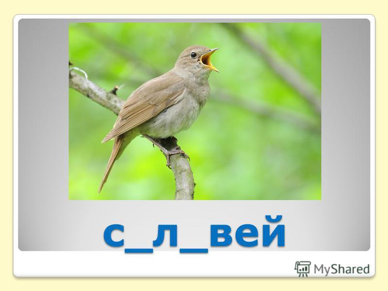 с_л_вей