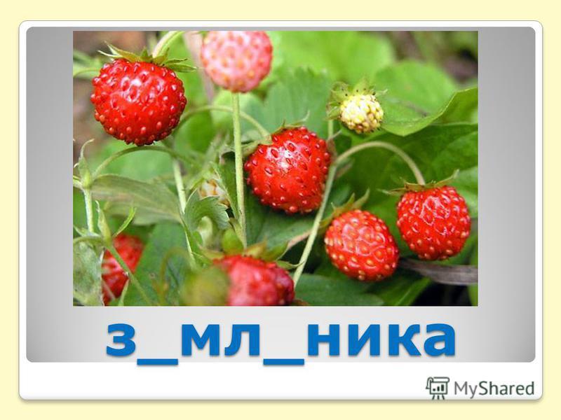 з_мл_ника