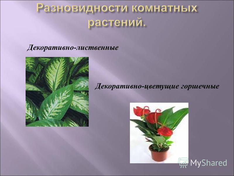 Декоративно - лиственные Декоративно - цветущие горшечные