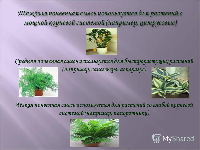 Средняя почвенная смесь используется для быстрорастущих растений (например, сансевьера, аспарагус) Лёгкая почвенная смесь используется для растений со слабой корневой системой (например, папоротники)