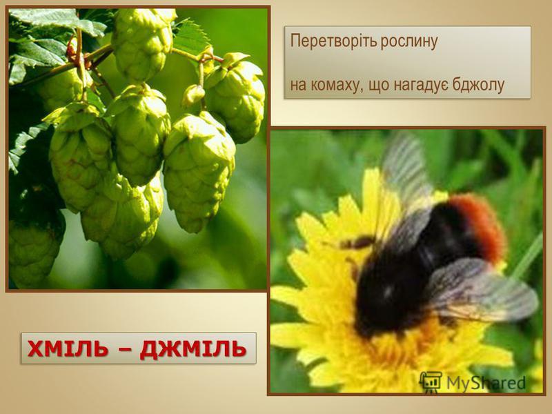Перетворіть рослину на комаху, що нагадує бджолу Перетворіть рослину на комаху, що нагадує бджолу ХМІЛЬ – ДЖМІЛЬ