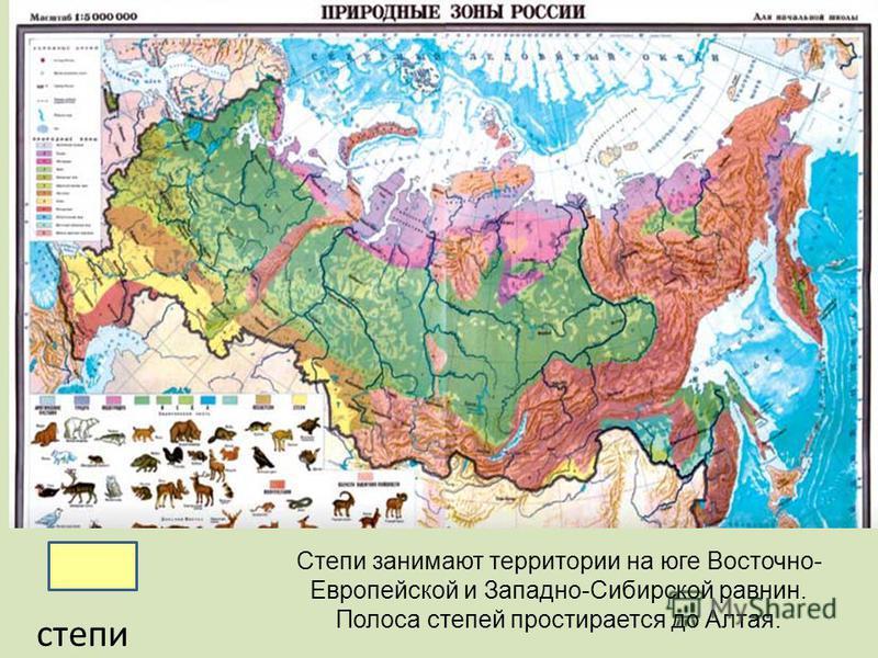 степи Степи занимают территории на юге Восточно- Европейской и Западно-Сибирской равнин. Полоса степей простирается до Алтая.