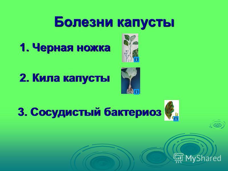 Болезни капусты 1. Черная ножка 2. Кила капусты 3. Сосудистый бактериоз