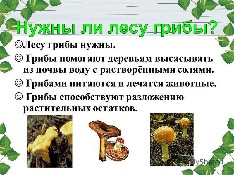 Лесу грибы нужны. Грибы помогают деревьям высасывать из почвы воду с растворёнными солями. Грибами питаются и лечатся животные. Грибы способствуют разложению растительных остатков.