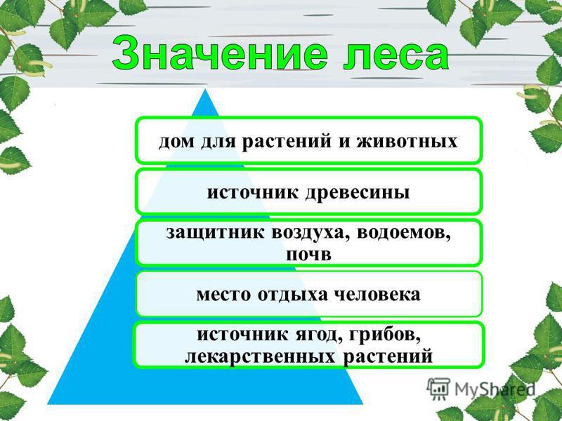 дом для растений и животных источник древесины защитник воздуха, водоемов, почв место отдыха человека источник ягод, грибов, лекарственных растений