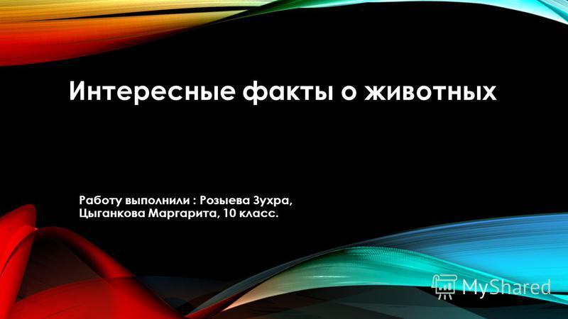 Интересные факты о животных Работу выполнили : Розыева Зухра, Цыганкова Маргарита, 10 класс.