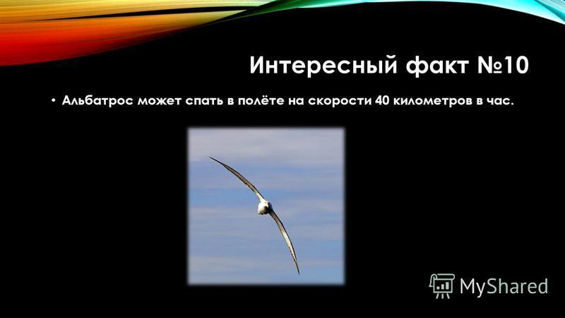 Интересный факт 10 Альбатрос может спать в полёте на скорости 40 километров в час.