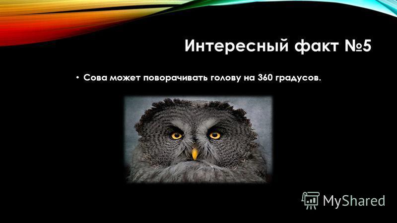 Интересный факт 5 Сова может поворачивать голову на 360 градусов.