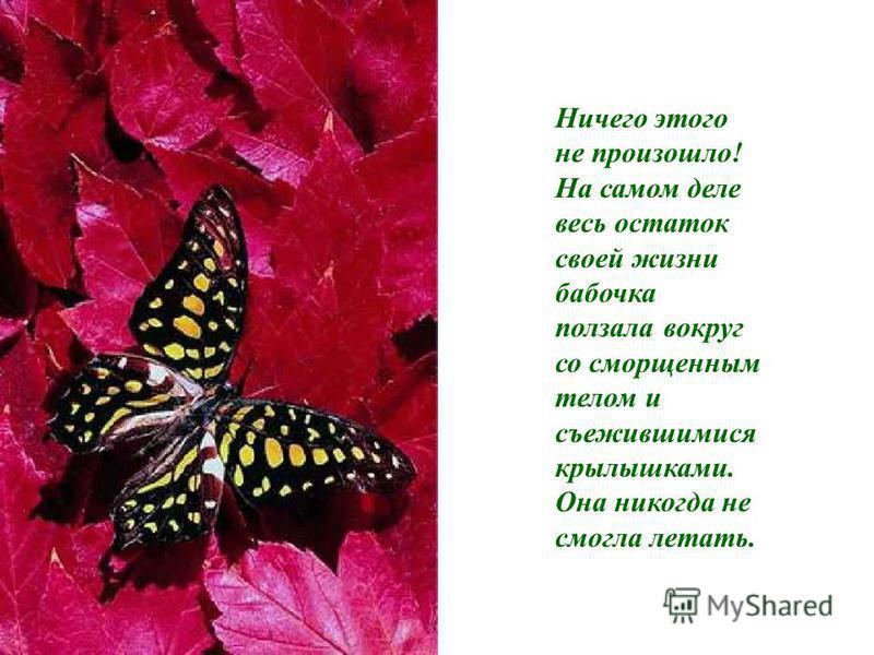 Человек продолжал наблюдать за ней, потому что он ожидал, что в любой момент крылышки ее раскроются, увеличатся и расправятся настолько, чтобы быть в состоянии поддерживать тело бабочки, и станут крепкими.
